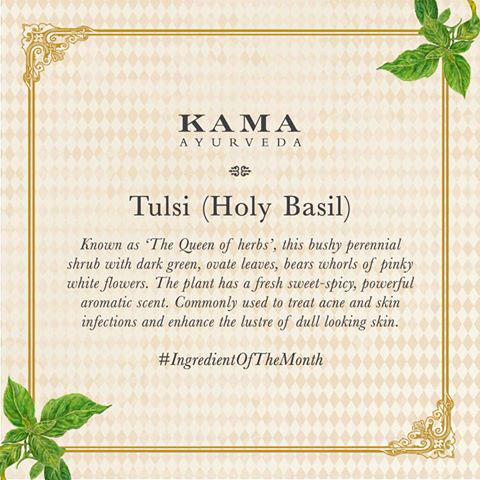 Ayurvedic treatment: tulsi (holy basil)