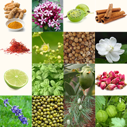 AYURVEDIC INGREDIENTS USED IN KAMA PRODUCTS